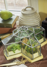Miniature Conservatory -- tray