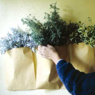 Loosely Pack Herbs