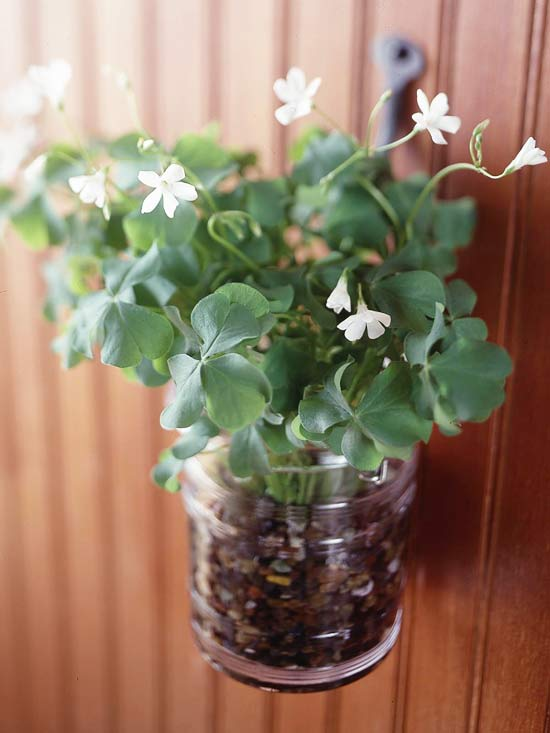StPatDay_Small flower pot hanging