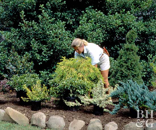 woman positioning shrubs in bed