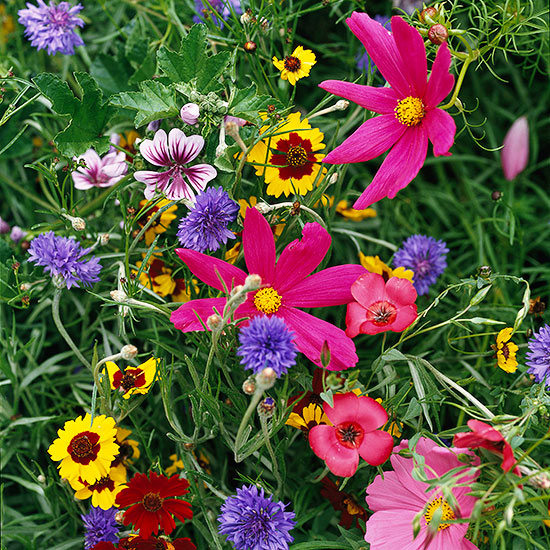GardenBold_Assorted Wild Flowers In Field