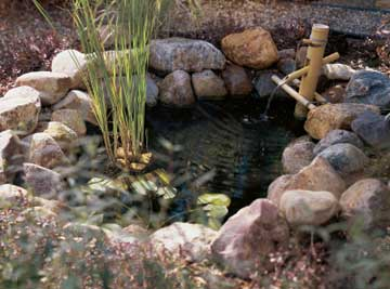 Aquatic Plants in Pond