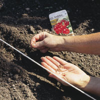 Planting seeds in garden bed