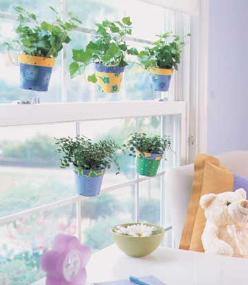 Hanging Plants in Window