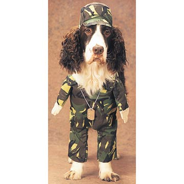 Dog In Army Costume