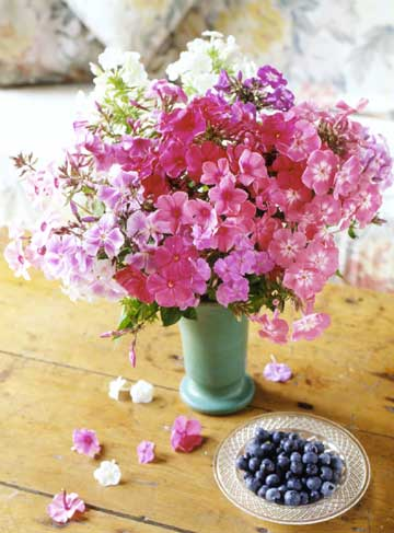 Phlox Arrangement