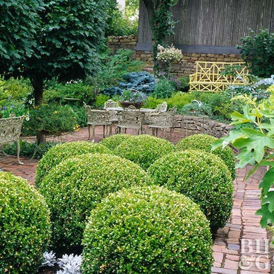 Trimmed boxwood on brick patio