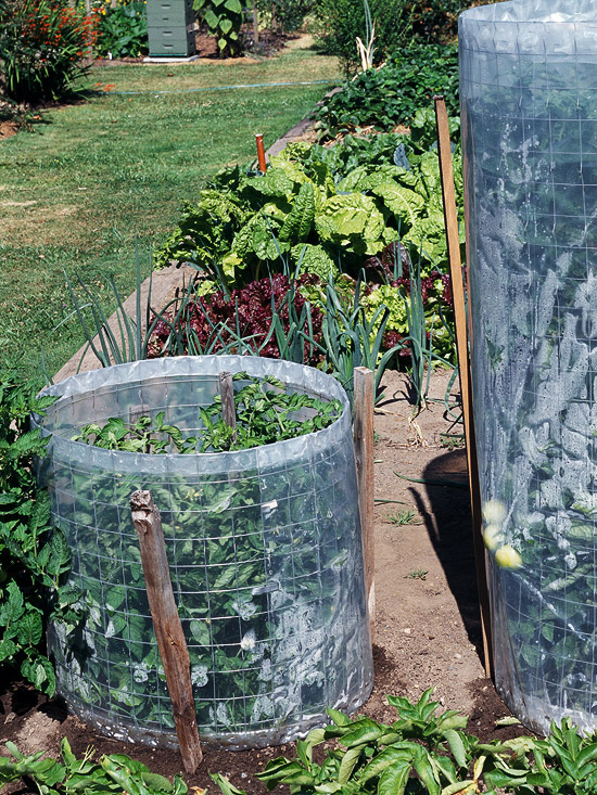 wire hoop tomato cage with plastic wrap