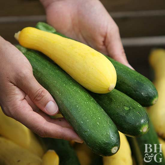 yellow green zucchini