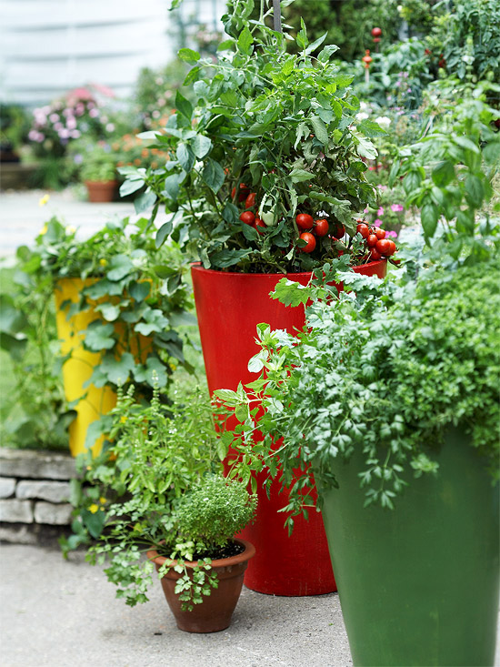 container vegetable garden. Vegetable Container Garden Materials. Pinterest. Tomato, Basil, Italian Parsley B