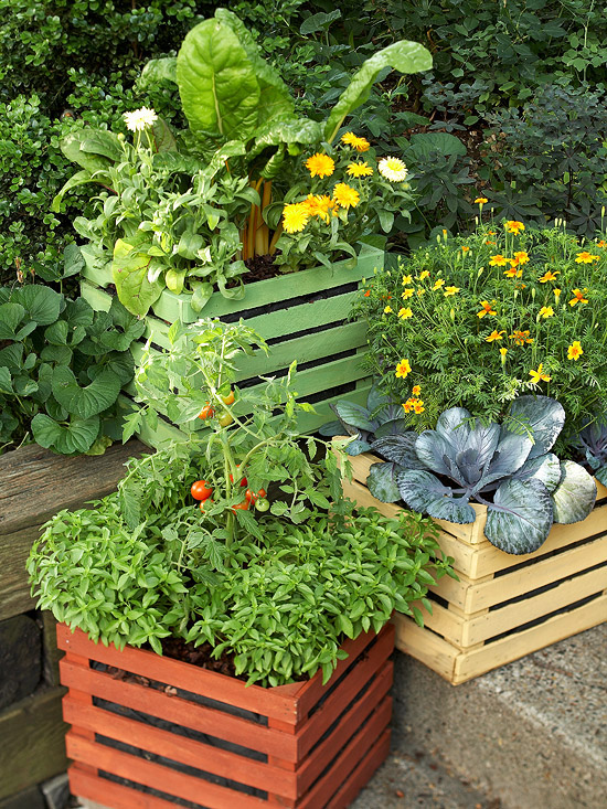 container vegetable garden. Basil, Tomato, Cabbage, Chard, Calendula Container Vegetable Garden
