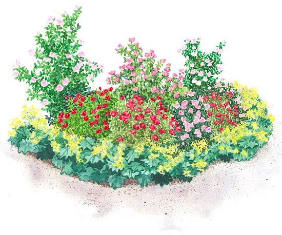 Easy Rose Garden Plan