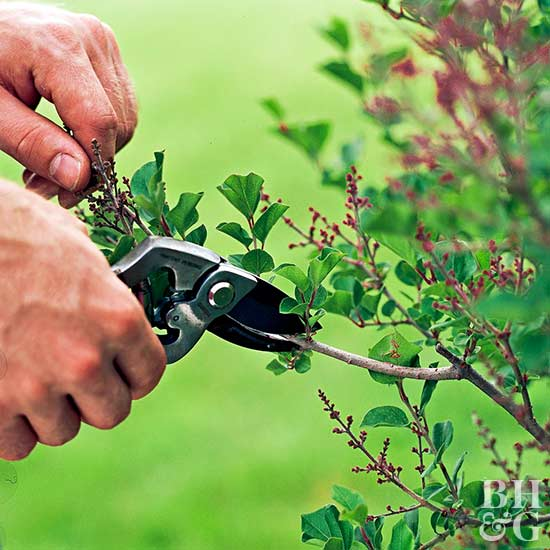 gardening, shears, trimming hedge