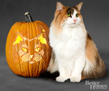 BHG watermark - Norwegian Forest Cat
