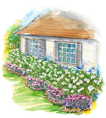 Easy-Care Garden for the South Illustration