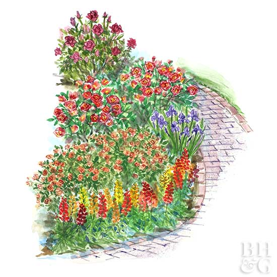 Small-Space Rose Garden Plan Illustration