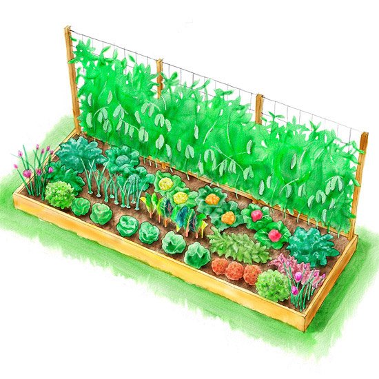 Cool Season Kitchen Garden illustration