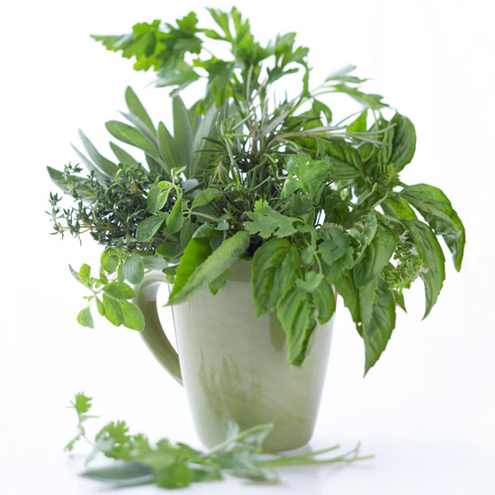 Container of fresh herbs