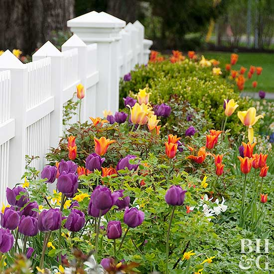 purple yellow orange and red tulips blooming in garden