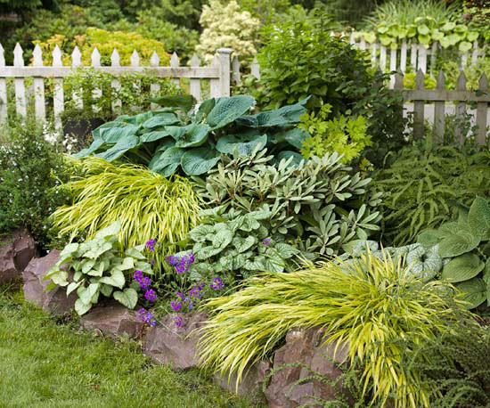 Garden with leafy plants and stone surround
