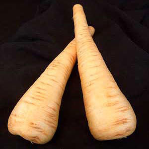 All American Parsnips