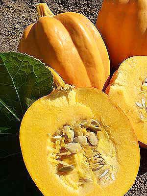 Table gold squash