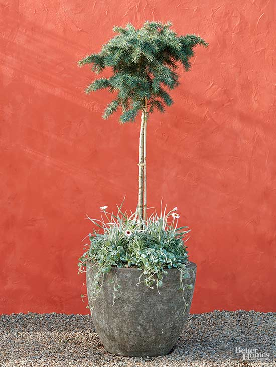 Single Tree Container