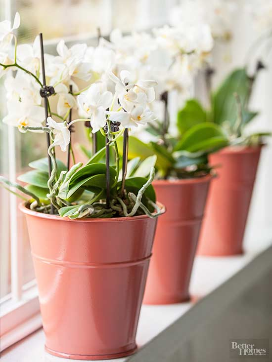 Orchids in planters