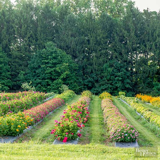 Rows of flower beds