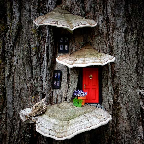 3 mushrooms and fairy door