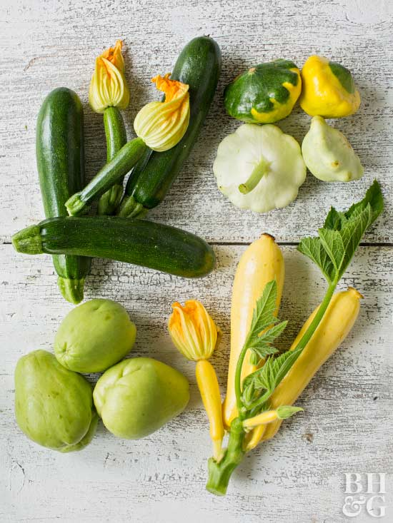 green and yellow summer squash