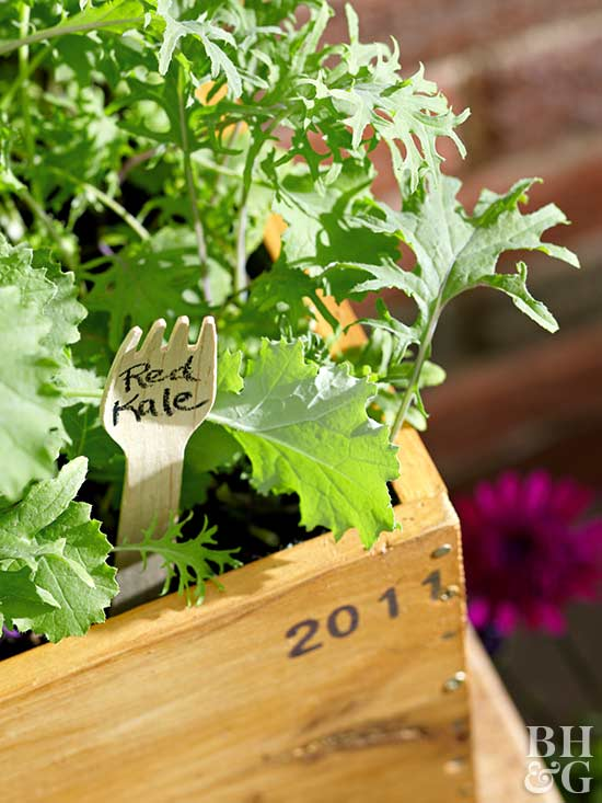 box planter, red kale, planter box