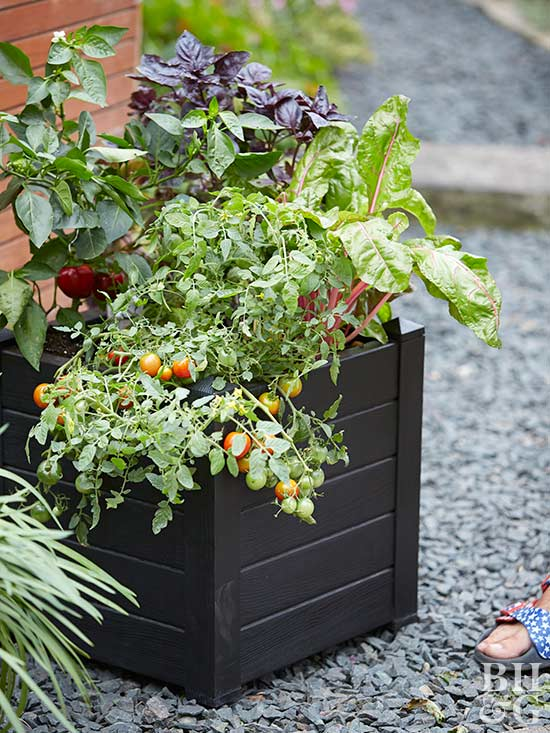 vegetables planted in black square container