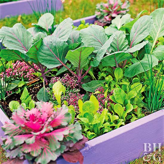 Small-Space Vegetable Garden Plan & Ideas | Better Homes & Gardens