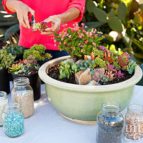 Mini Succulent Container Garden Better Homes Gardens