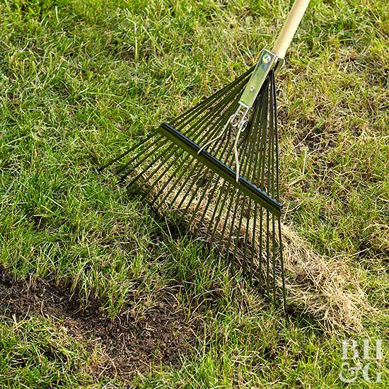 raking dead grass