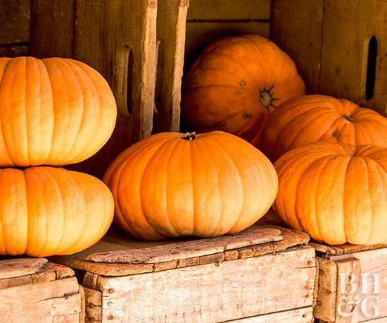 stacked pumpkins on crate