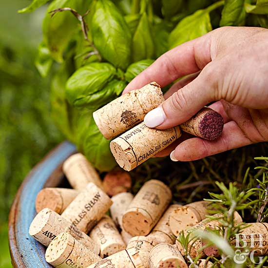 placing corks in pot with plants
