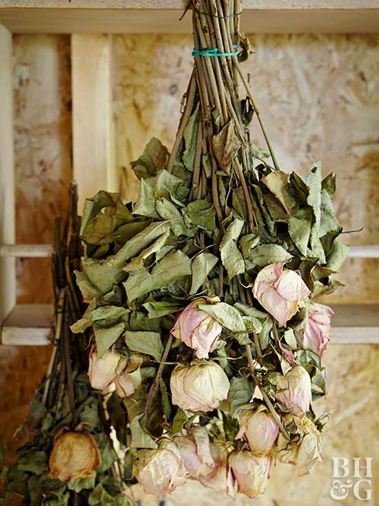 rose bouquet hanging upside-down to dry