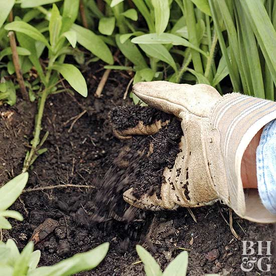 add compost soil mix to hole for plants