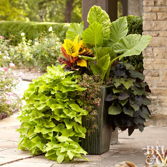 South Florida Tropical Landscape Ideas Planter Container: Tropical Flowers For Your Patio