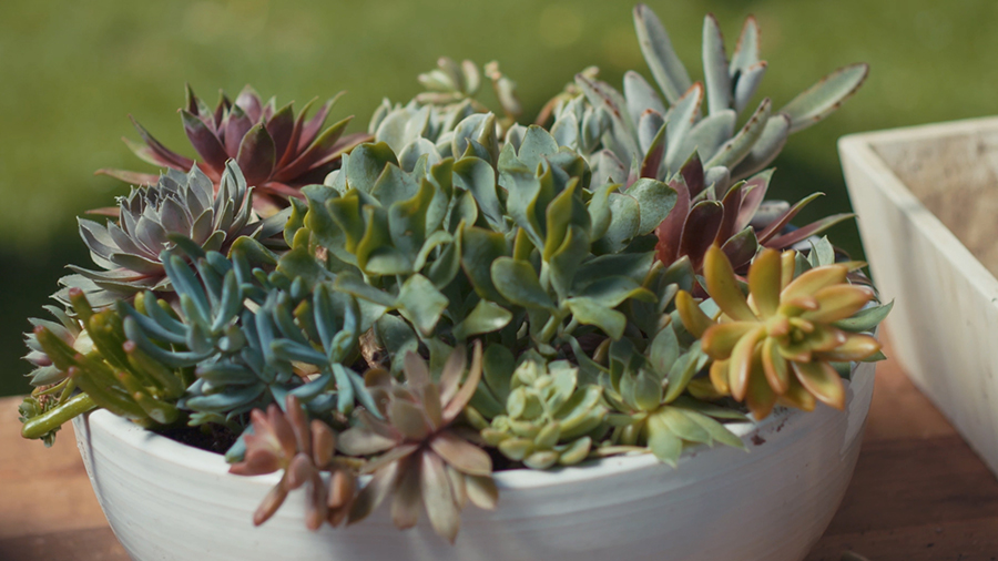 How to Plant a Succulent Dish Garden